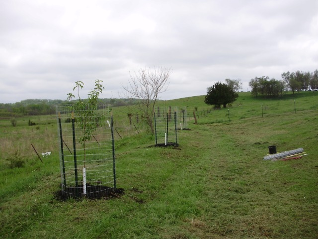 We planted 2 peach, 2 cherry and a pear tree last spring, along with 3 apple trees we planted the year before.